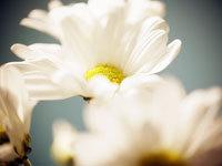 Productos de homeopatía, dermocosmética y dietética en Carabanchel
